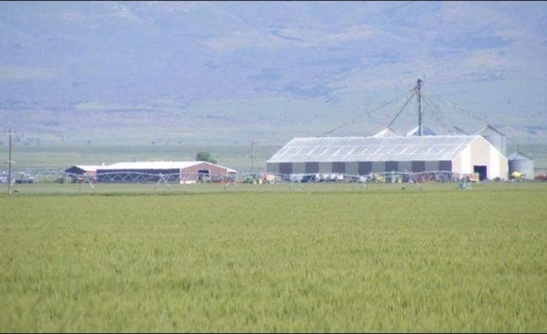 Curlew Valley Farm