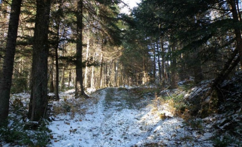 Bald Mountain Forest