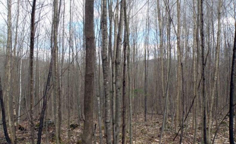 Johnson Pond Forest