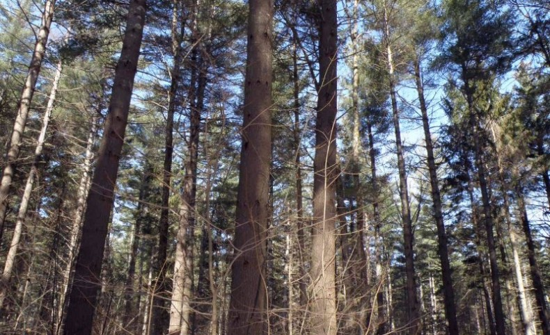 Herring Brook Forest