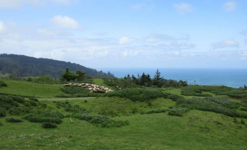 Ocean View 1,076 Acres with Pasture and Timber