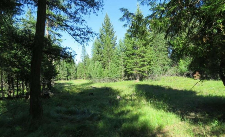 Parmenter Creek 40 Acres