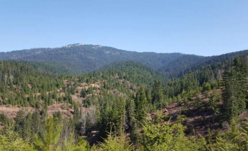 Cougar Mountain Views