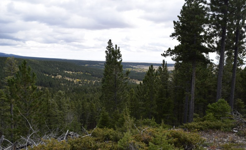 Timber Creek Cabin