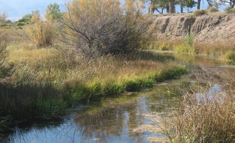 Apache Creek Preserve