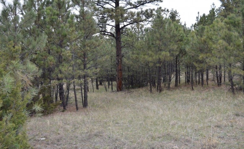Twisted Pines 20 Acres