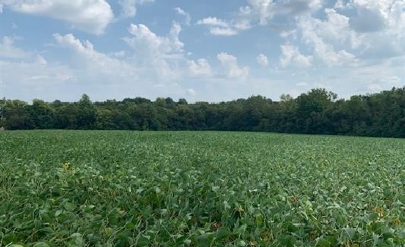 Beautiful wooded land with 33 ac of tillable land