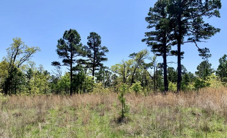 Pine Mountain Retreat #2