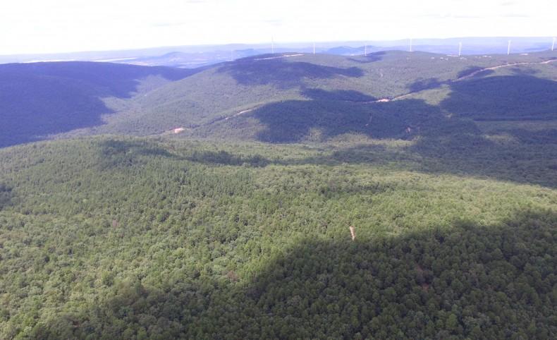 Kiamichi Trail Junction